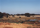 Photo of Sacramento Valley Robla Creek Wetlands