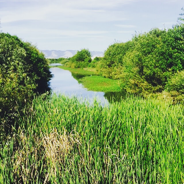 401 Water Quality Certification And Wetlands Program