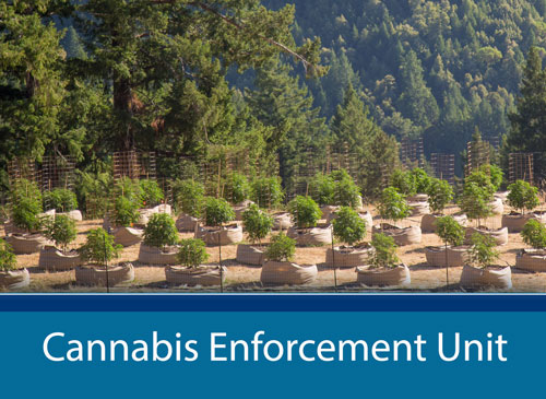 Cannabis Enforcement Unit page